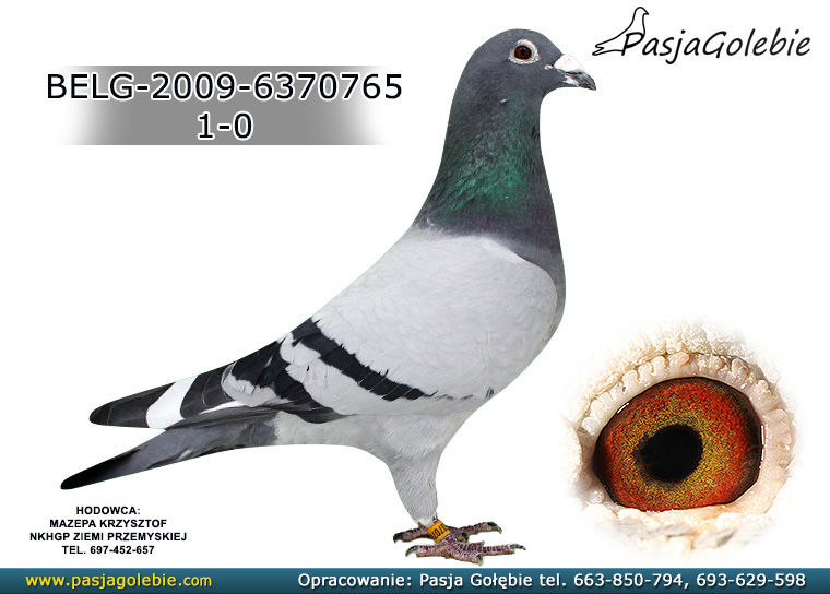 BELG-2009-6370765