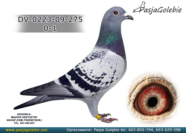 DV-0223-09-275