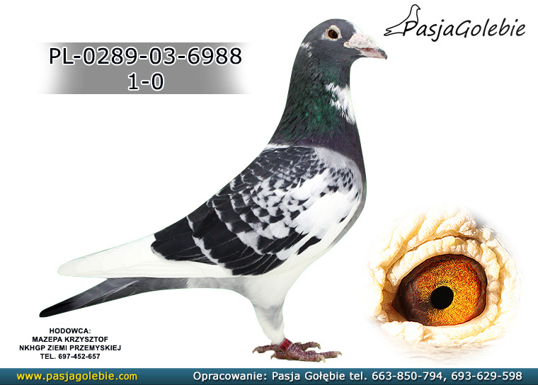 PL-0289-03-6988