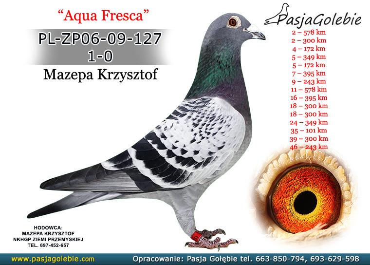 PL-ZP06-09-127