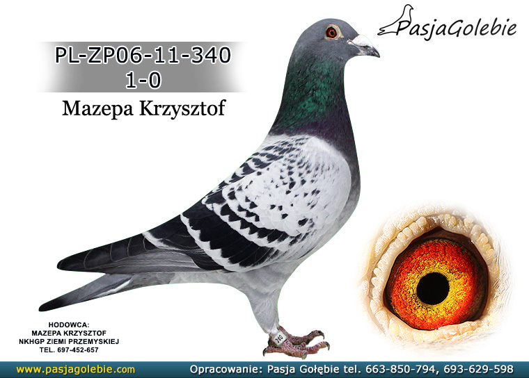 PL-ZP06-11-340