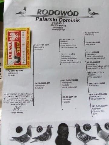 palarski 1