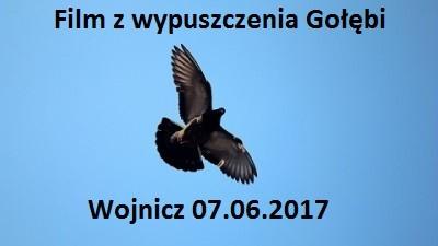 Wypuszczenie gołębi Wojnicz 07.05.2017