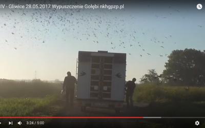 Lot IV – Gliwice 28.05.2017 Wypuszczenie Gołębi