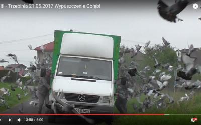 Filmik z Wypuszczenia Gołębi Lot III Trzebinia 21.05.2017