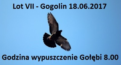 Lot VII Gogolin II